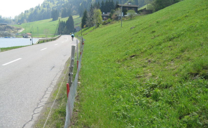 Amphibienschutz entlang Kantonsstrasse Gross – Steinbach, Schwyz