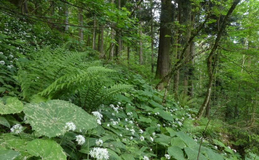 Standortskartierung Staatswald Kanton Zug