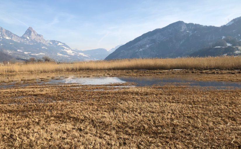 Pegelregulierung Lauerzersee: Datenerhebung Amphibienbestände