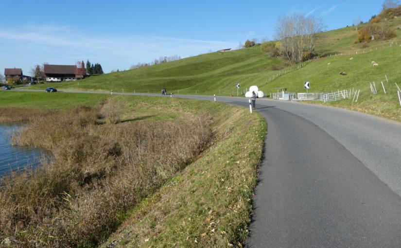 Amphibienschutz Schönbächli / Rain, Kanton Schwyz