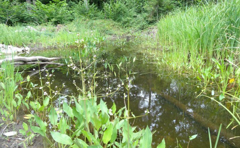 Bau und Erweiterung von Amphibienweihern