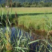Reussdelta Fischgraben